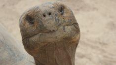 Zoo chino pega canasta sobre una tortuga para que la gente pida deseos y le lance monedas