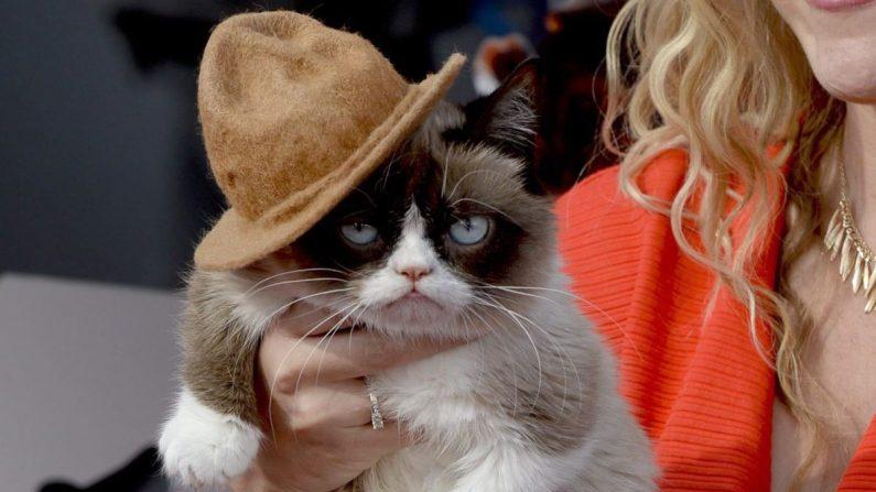 """""""Grumpy Cat"""" tenía mas de un millón y medio de seguidores en Twitter, donde sus admiradores están expresando su dolor con memes y mensajes, y el museo de Madame Tussaud en San Francisco le hizo una estatua de cera. EFE/Archivo"""
