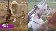 El vínculo entre animales de distinta especie demuestra que la amistad supera cualquier diferencia