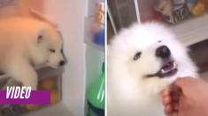 Cachorro encuentra un lugar muy particular para tomar una siesta, ¡dentro del refrigerador!