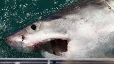 """Monstruoso tiburón blanco """"sale de la nada"""" y ataca a un padre y su hijo mientras pescan"""