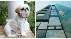 Mira hacia arriba, ve a un perro colgando de un balcón ¡y se prepara para una atrapada épica!
