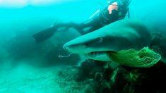 Hombre filma el momento en que un tiburón muerde a su esposa durante la luna de miel