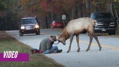 El encuentro frente a frente de un fotógrafo con un alce toro que dejó sin aliento a toda Internet