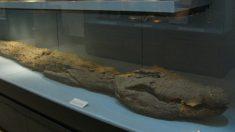 Antiguos egipcios momificaban cocodrilos. Tomografía de 'cocodrilo' de 2500 años revela algo extraño