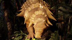 """""""Momia dinosaurio"""" mejor conservada de 1134 kilos, pesa casi lo mismo que cuando estaba viva"""