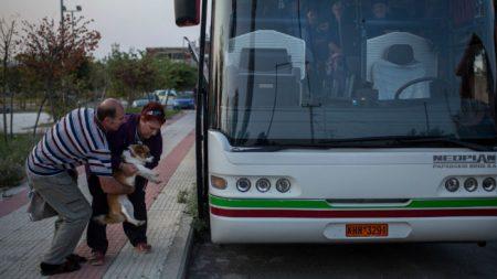 Familia descubre por qué no puede encontrar a su perro perdido: anda de paseo de bus en bus