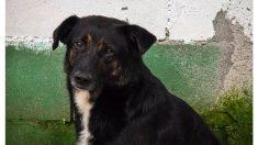 Heroica perrita da su vida para salvar a sus cachorros y dueños en el terremoto de Perú