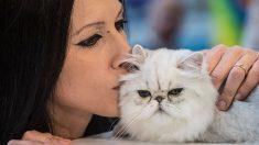 Un gatito salva a su dueña embarazada que estuvo a punto de morir mientras dormía