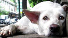 Foto de un perro que espera a su dueño muerto conmueve a todos al compararlo con Hachiko