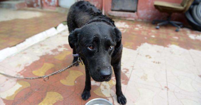 Se filmaron jugando al béisbol con un perro en Argentina hasta matarlo, la policía los busca
