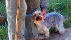 Hombre con 27 perros tiene un último deseo antes de morir: que alguien adapte su familia peluda