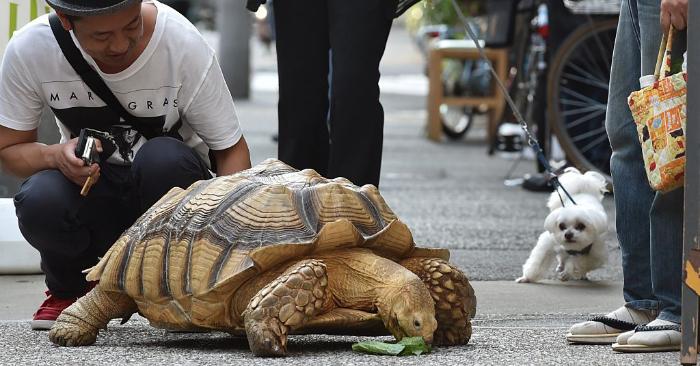 Foto ilustrativa de KAZUHIRO NOGI/AFP/Getty Images.