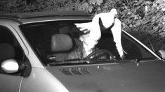 """El """"Espíritu Santo"""" salvó a un conductor de una multa por exceso de velocidad, afirmó la policía"""