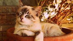 Mexicanos denuncian que el gobierno de AMLO quiere sacrificar los gatos del Palacio Nacional