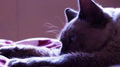 Aprende a trenzar una confortable cama para tu gato, ¡fácil y con un estilo único!