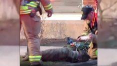 Bomberos rescatan a perro de una casa en llamas y lo asisten increíblemente hasta revivirlo