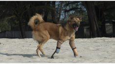 Técnico protésico ya creó miles de piernas para que los animales amputados puedan correr de nuevo