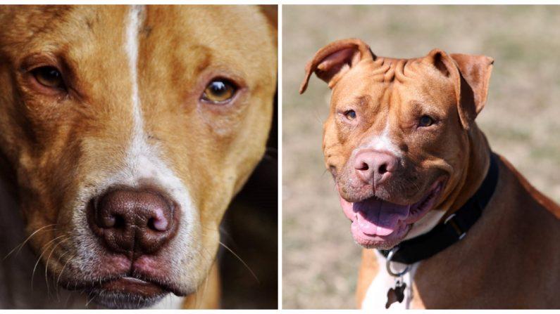 Niños inyectan drogas a un perrito y una denuncia lo salva justo a tiempo