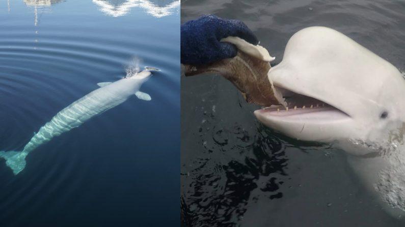 (Foto cortesía de la Dirección de Pesca)