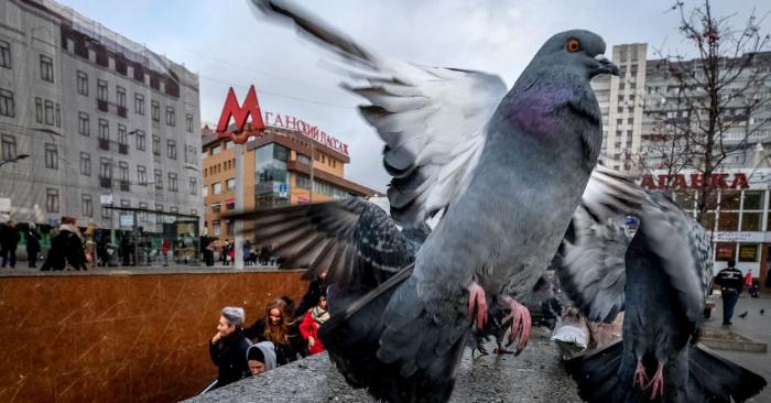 Foto ilustrativa de YURI KADOBNOV/AFP/Getty Images.