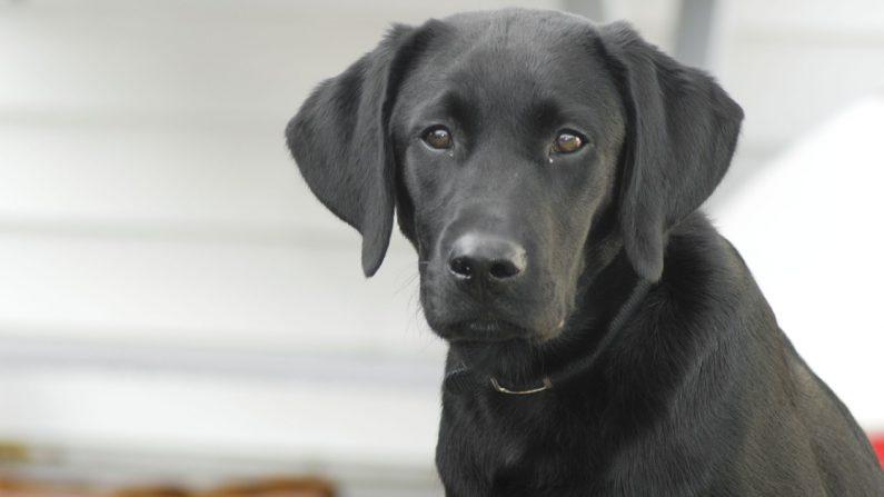 Aunque dejó sin comer a su perro para que muera de hambre, el cachorro logró salvarse de milagro