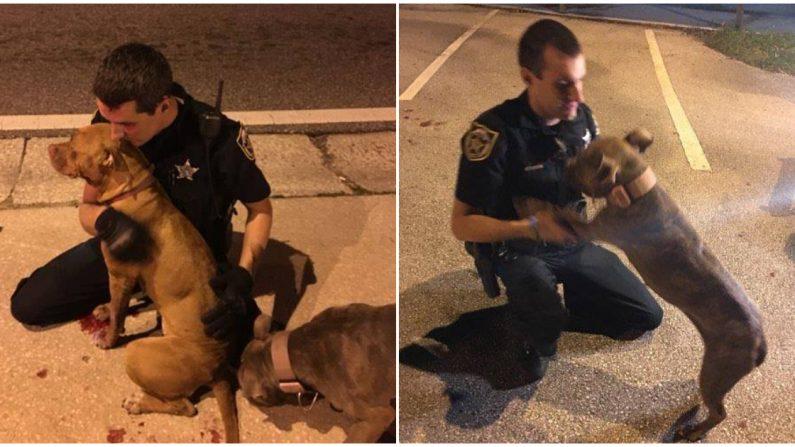 (Crédito: Orange County Sheriff's Office, Florida)