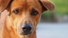 Perrito triste espera el regreso de su amigo hasta que entiende todo cuando ve su ataúd