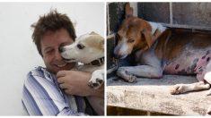 Perro gravemente quemado se vuelve loco de alegría cuando ve al hombre que le salvó la vida