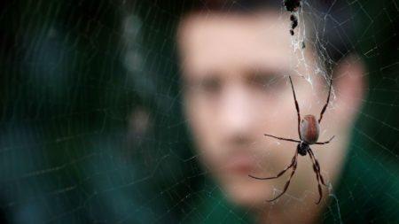 Barre un nido de arañas por la noche y amanece enfermo con vértigos. Una se alojó en su oído