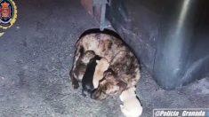 Rescatan a una perra y sus cachorros abandonados en un contenedor de basura en España