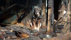 Perro despierta a sus dueños y los salva de un incendio devastador que quemó la casa por completo