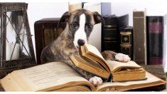 Perro callejero roba de una tienda libro titulado