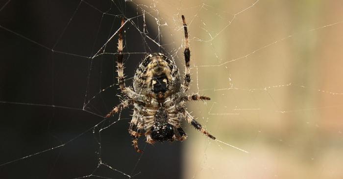 Va al médico por un dolor de cabeza y le hallan una araña tejiendo su tela dentro del oído