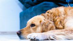 Estudiante fallece y su perro llora todas las noches esperando su regreso