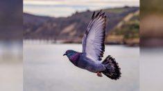 """Esta paloma fue multada por volar con """"exceso de velocidad"""" y su foto se vuelve viral"""