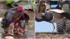 Estas adorables mamás del reino animal lo dan todo por sus hijos, ¡merecen un feliz día!