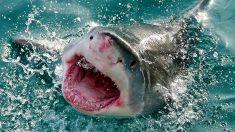 Gran tiburón blanco salta hacia un barco de pesca y hace que un niño salga corriendo del susto (video)