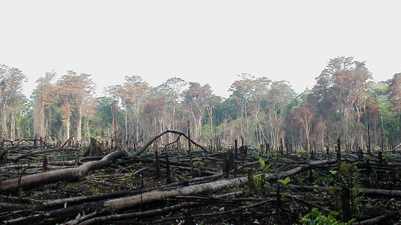 Deforestación en el Sur de México (Wikimedia)