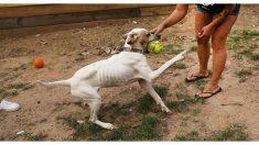 Perrito desnutrido estaba agonizando hasta que al fin sus vecinos deciden hacer algo al respecto