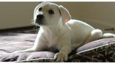 Descubre que su perrito rescatado duerme parado, la verdadera razón le rompe el corazón