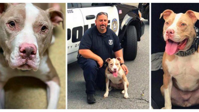 Crédito: Departamento de Policía de Poughkeepsie   CPPD K-9 Kiah)
