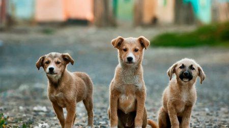 Estudiante mexicana crea croquetas anticonceptivas para evitar la muerte de muchos perritos callejeros