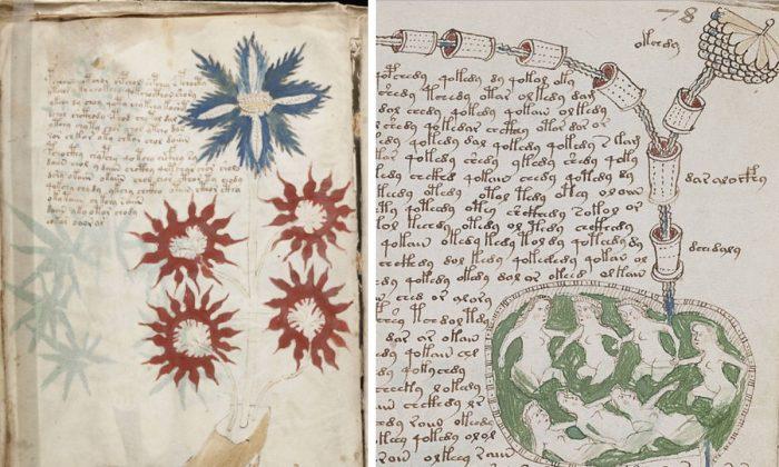 Dos páginas del manuscrito Voynich. (Public Domain/Wikimedia)