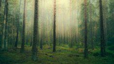Cazador escucha ruidos en el bosque, piensa que es un coyote, pero lo que ve lo impacta