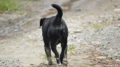 Perro se vuelve héroe al encontrar y salvar a un niño enterrado vivo por su madre adolecente