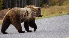 Fotografían a un oso disfrutando del jacuzzi de una cabaña
