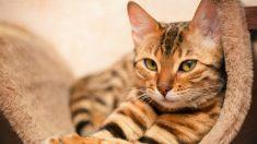 Rocían a un gato de familia con pintura amarilla y muere a los tres días