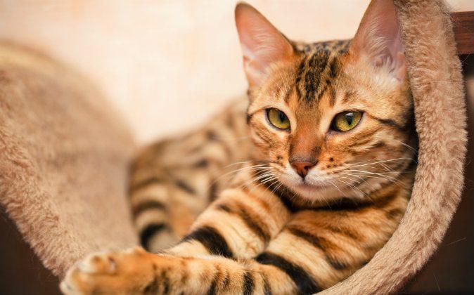 Foto ilustrativa de un gato. (Shutterstock*)