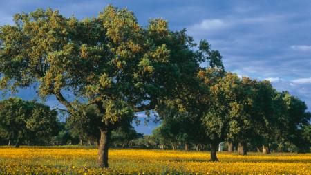 Hombre planta 6000 árboles tras la muerte de su esposa y 17 años después una toma aérea se hace viral